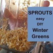 sprouts-easy-diy-winter-greens