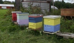 the apiary at medicine hill