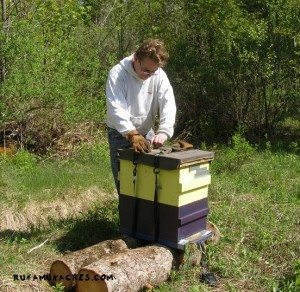 tips on handling beehives