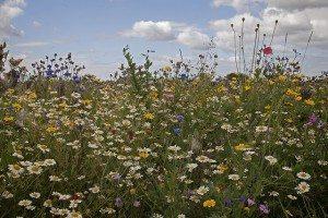 pollinator habitat for native bees