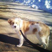willow runamuk's new dog
