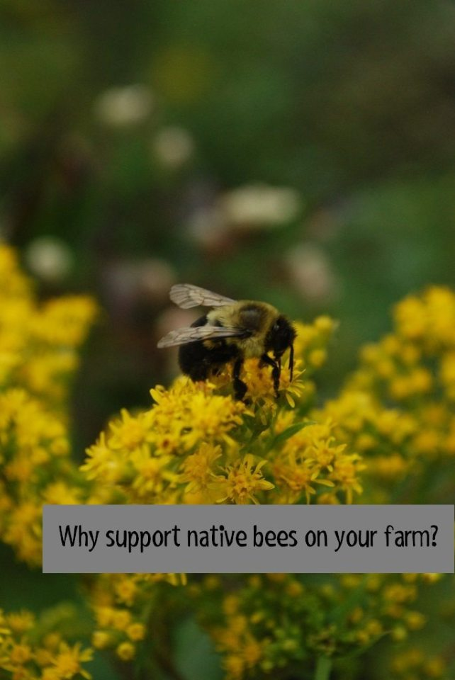 why support native bees on your farm
