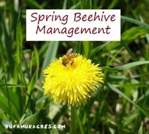spring beehive management