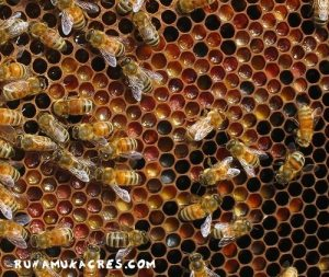 This is a frame of pollen, which is crucial for brood production.how to prepare beehives for winter.