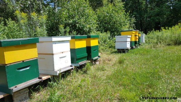 runamuk apiary_july15