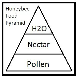 honeybee food pyramid