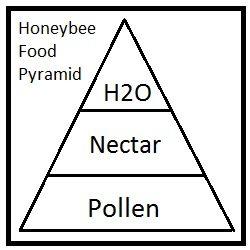 honeybee food pyramid