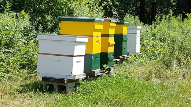 maine apiaries