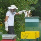 paul-smith-runamuk-apiary