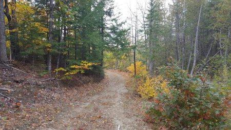 oak-forest
