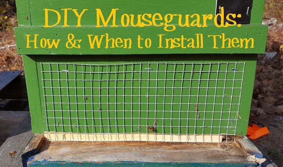 diy-mouseguards-how-and-when-to-install-them-on-your-beehive
