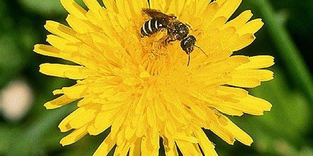 bee-habitat-planning