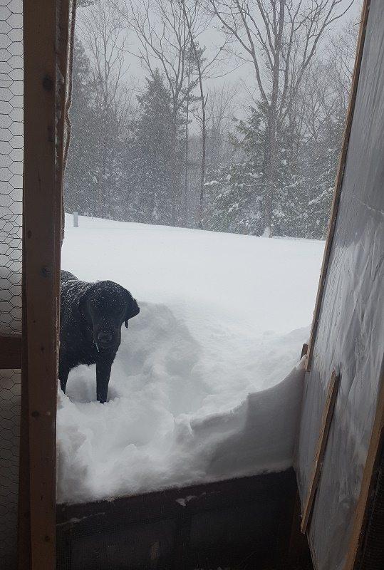 hoop-coop blizzard