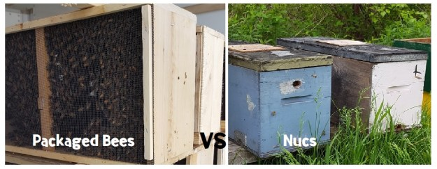 starting a beehive_packaged bees vs nucs