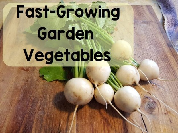 fast growing garden vegetables