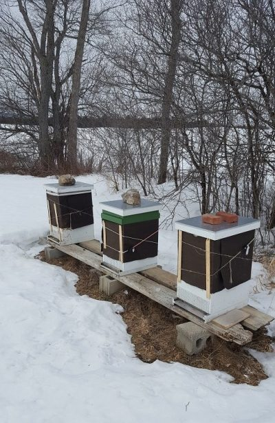 apiary-update-at-runamuk