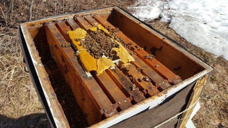 pollen patties for beehives