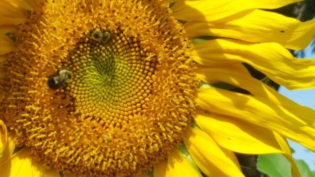 pollinator-habitat