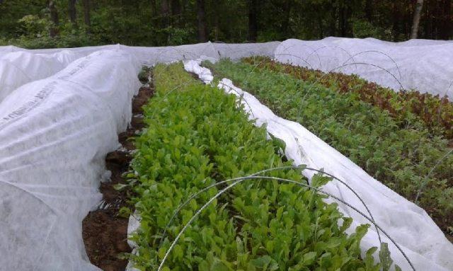 crops under agribon