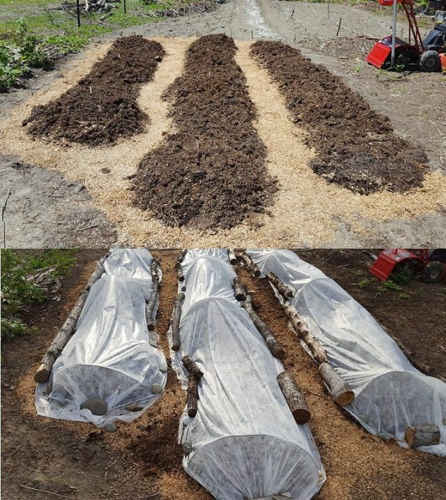 squash beds_before and after agribon