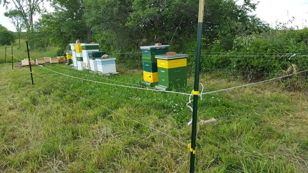 bear fencing at apiary