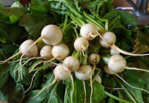 hakeuri turnips