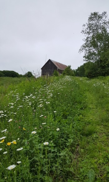 old farmland and barn with wild flowers