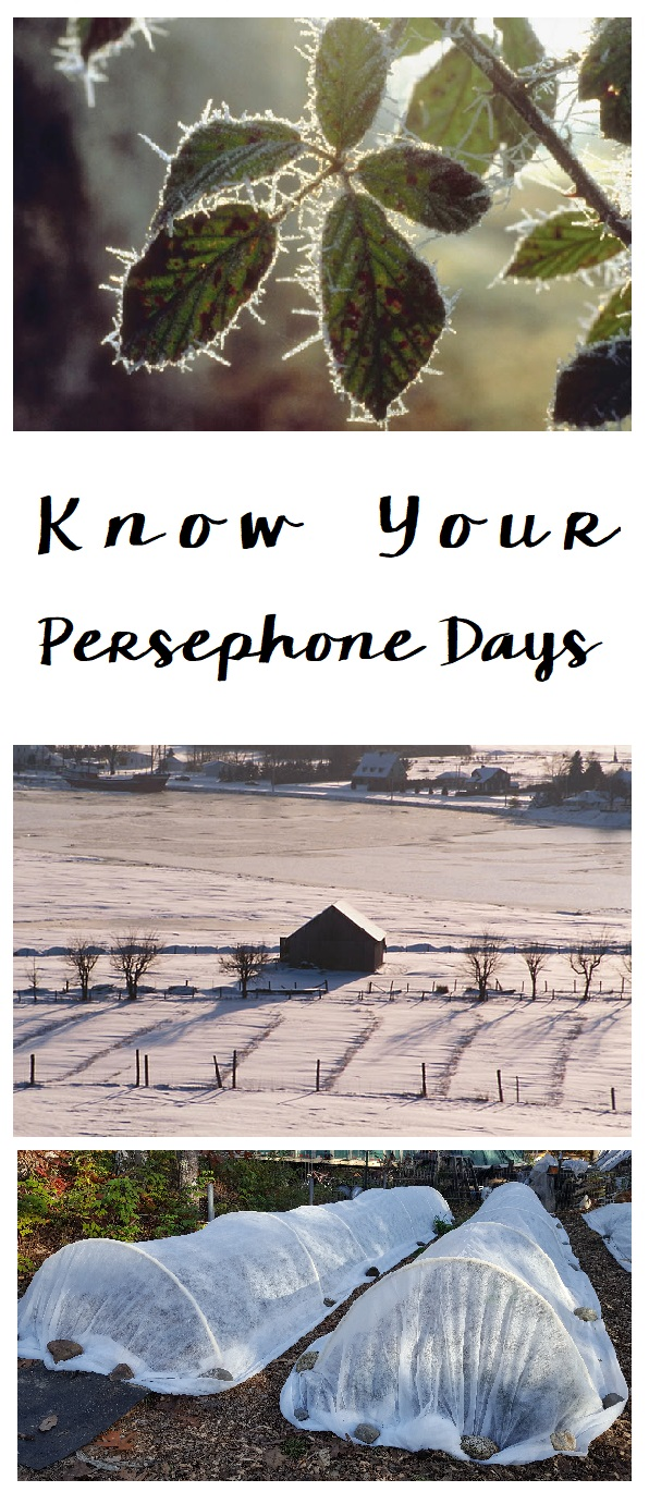 know your persephone days