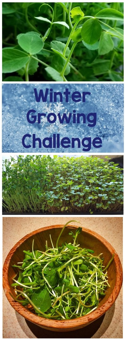 winter growing challenge