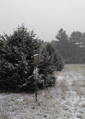 birdhouse in snowstorm