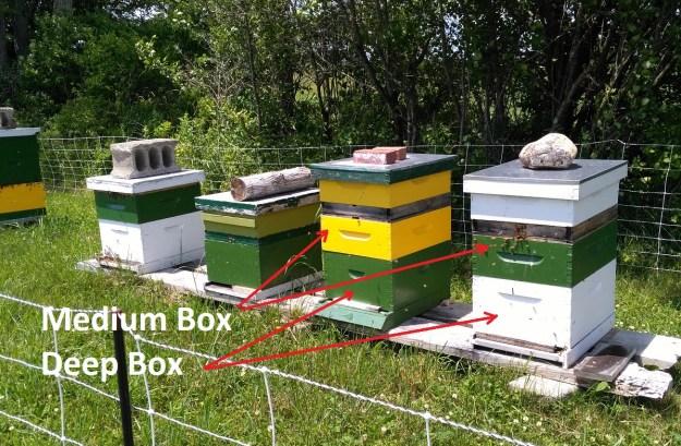 runamuk's hive set up