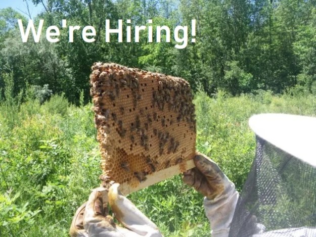 apiary apprenticeships