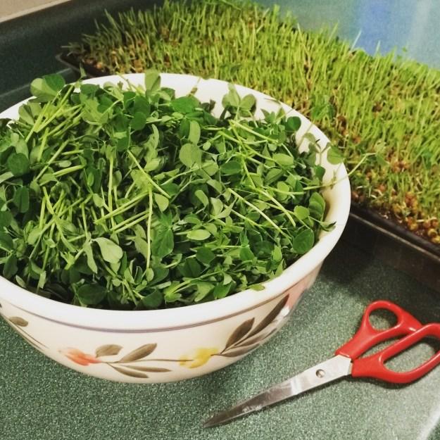 homegrown winter salad