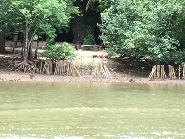 monkeys in mangrove forest