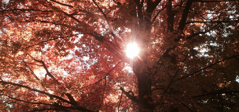 Fall Caumsett Park New York