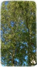 Början av september, fortfarande grön och skön.