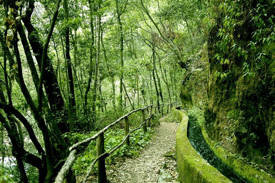 lapalma_bosque-de-los-tilos_pilarfernandez