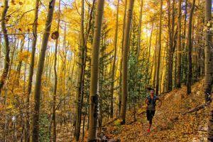 runner in colorado aspen grove fall autumn leaves