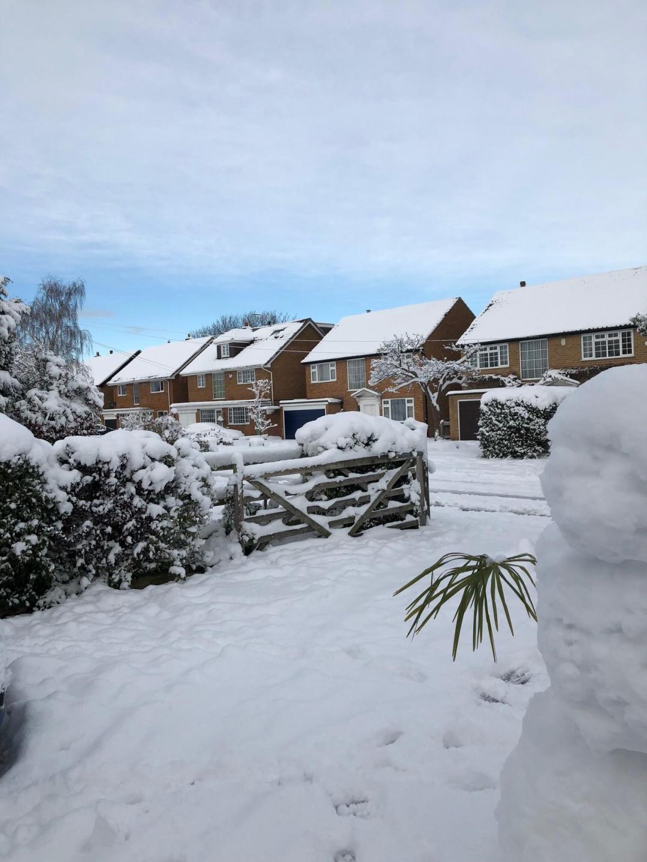 snow garden scene