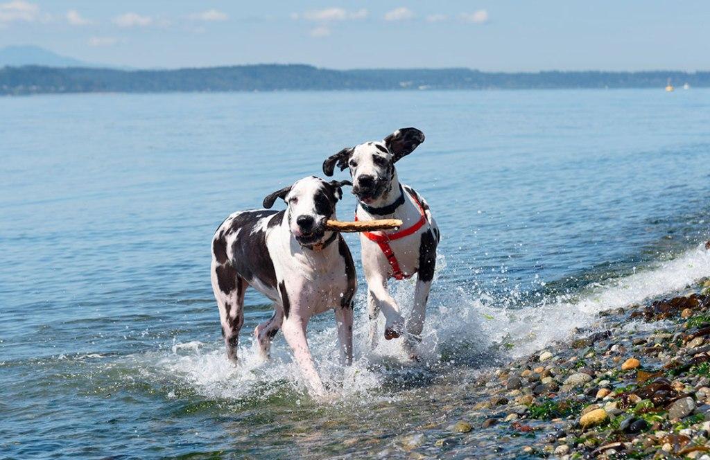 7 perros que puedes elegir para salir a correr