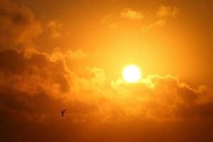 The sun may be pretty, but it's UV rays can be harmful to your eyes. Running sunglasses offer the solution.