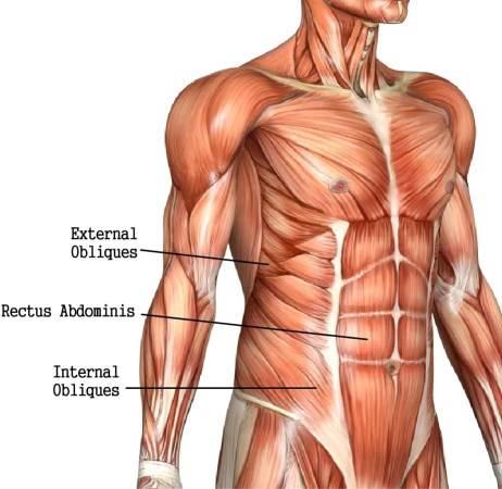 Ανατομία κοιλιακών μυών Άσκηση Σανίδα plank