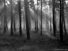 Morning in the woods, Talsperre Spremberg, Gemany