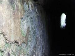through an aquaduct