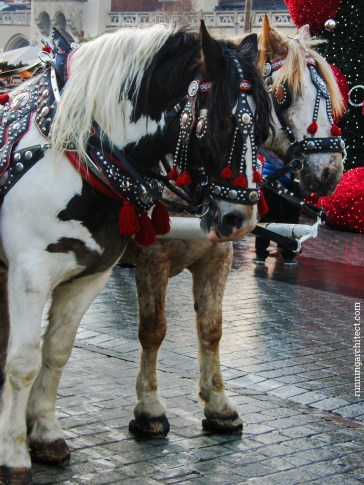 horses at rynek