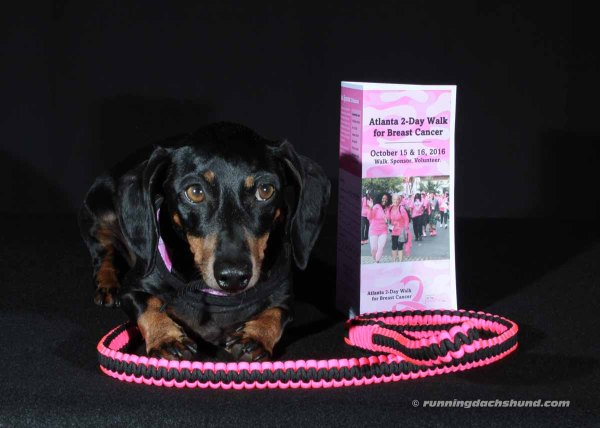 Scarlett Helps the 2 Day Atlanta Walk for Breast Cancer