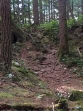 Trail Markers on Sandero Diez Vistas Trail, Coquitlam British Columbia