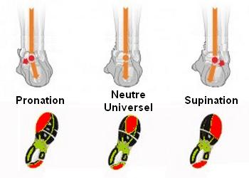 Un pied droit neutre, pronateur et supinateur - crédit photo : jogging-plus.com