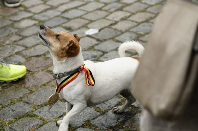 Un chien porte la médaille des 20km de Bruxelles