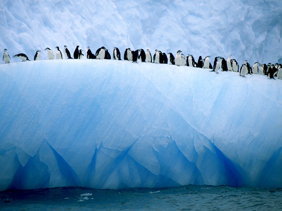 Penguins atop an iceberg